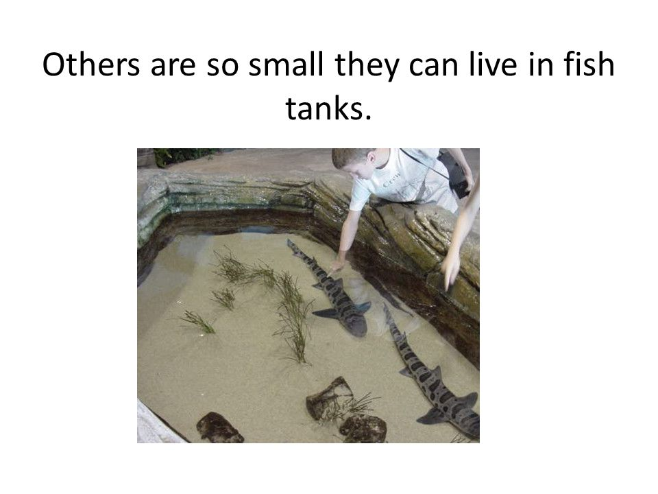 Others are so small they can live in fish tanks.