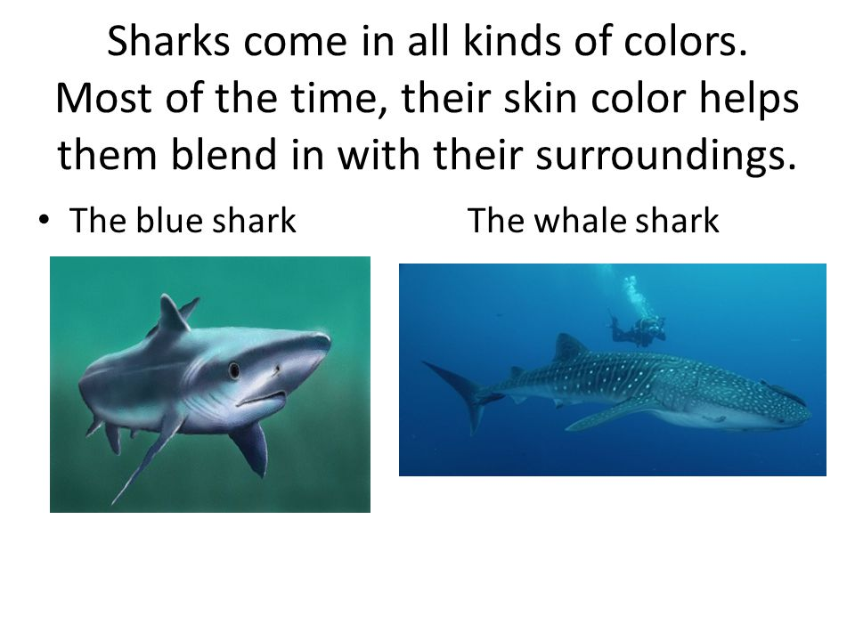 Sharks come in all kinds of colors.
