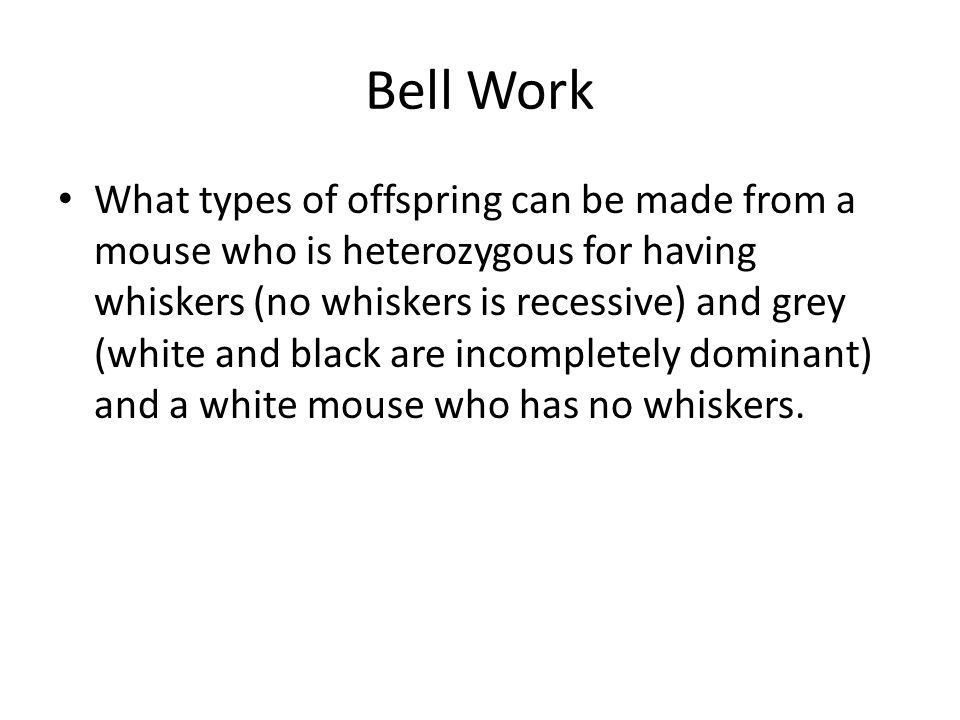Bell Work What types of offspring can be made from a mouse who is heterozygous for having whiskers (no whiskers is recessive) and grey (white and blac