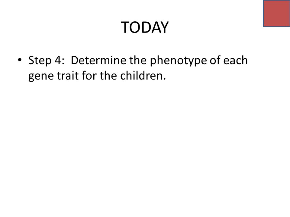 TODAY Step 4: Determine the phenotype of each gene trait for the children.