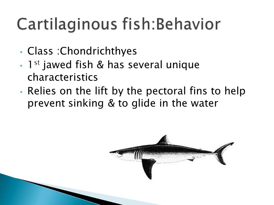 Fish whose entire skeleton is composed of cartilage are called cartilaginous fish Placoid scales: tiny teeth that are deeply embedded in the skin(Poin