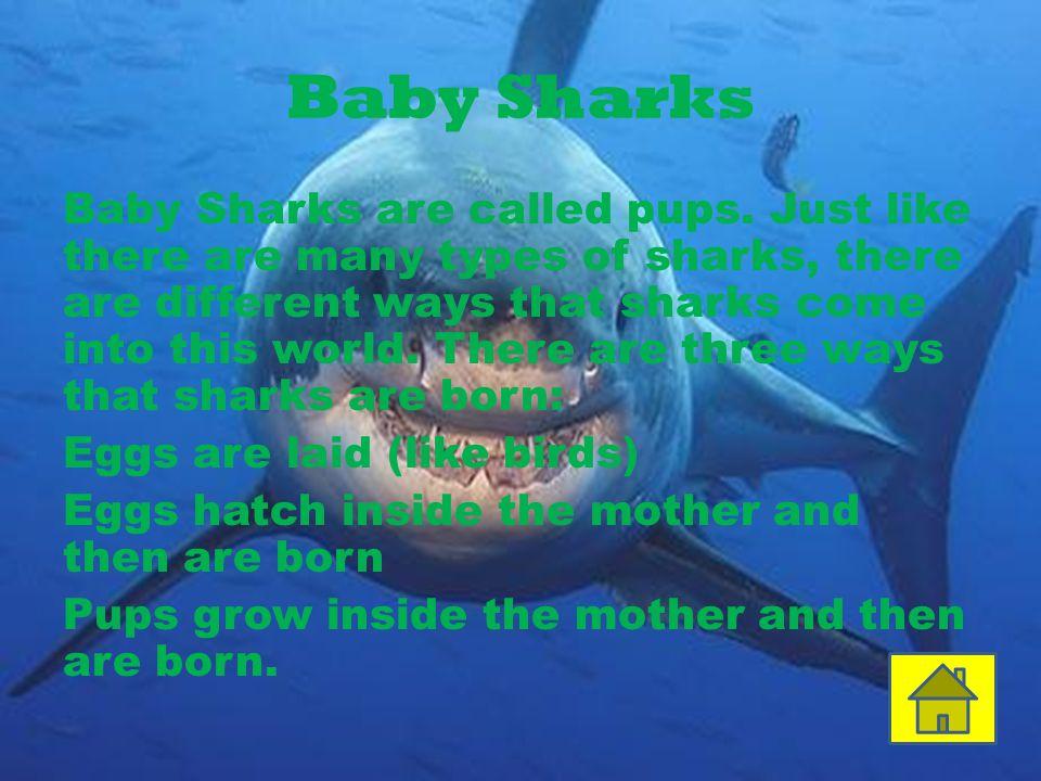 Shark teeth Sharks have an unlimited amount of teeth.