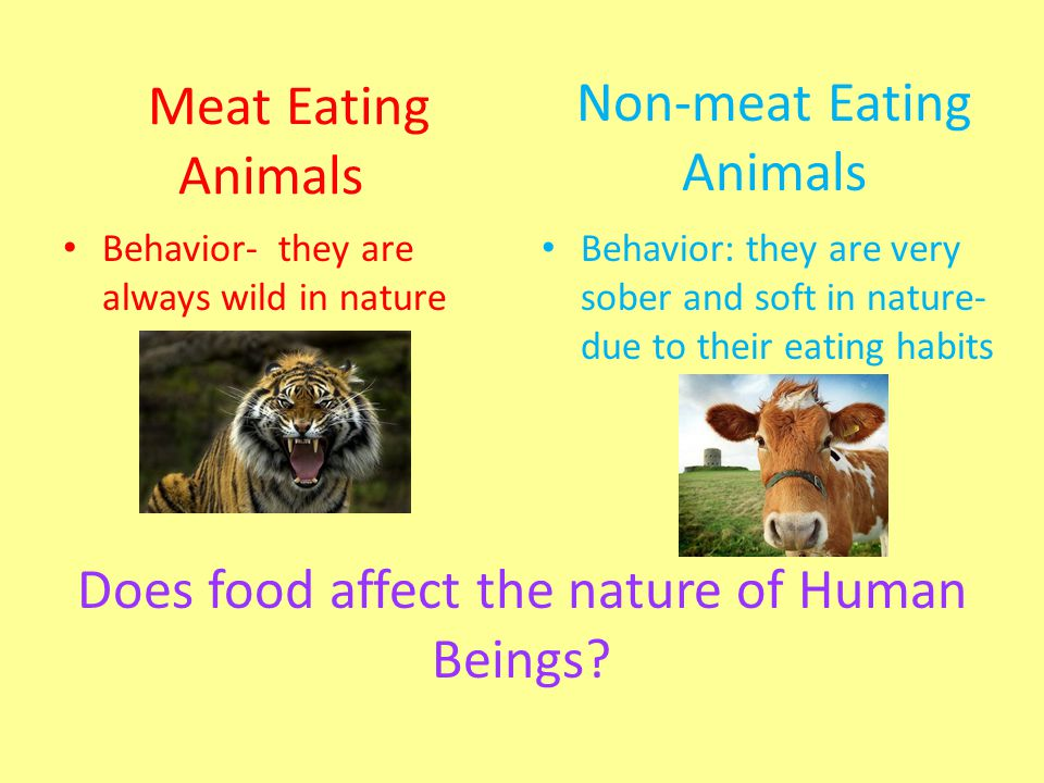 Meat Eating Animals Behavior- they are always wild in nature Behavior: they are very sober and soft in nature- due to their eating habits Non-meat Eat