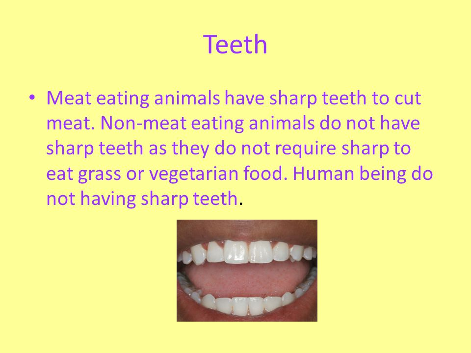 Teeth Meat eating animals have sharp teeth to cut meat. Non-meat eating animals do not have sharp teeth as they do not require sharp to eat grass or v