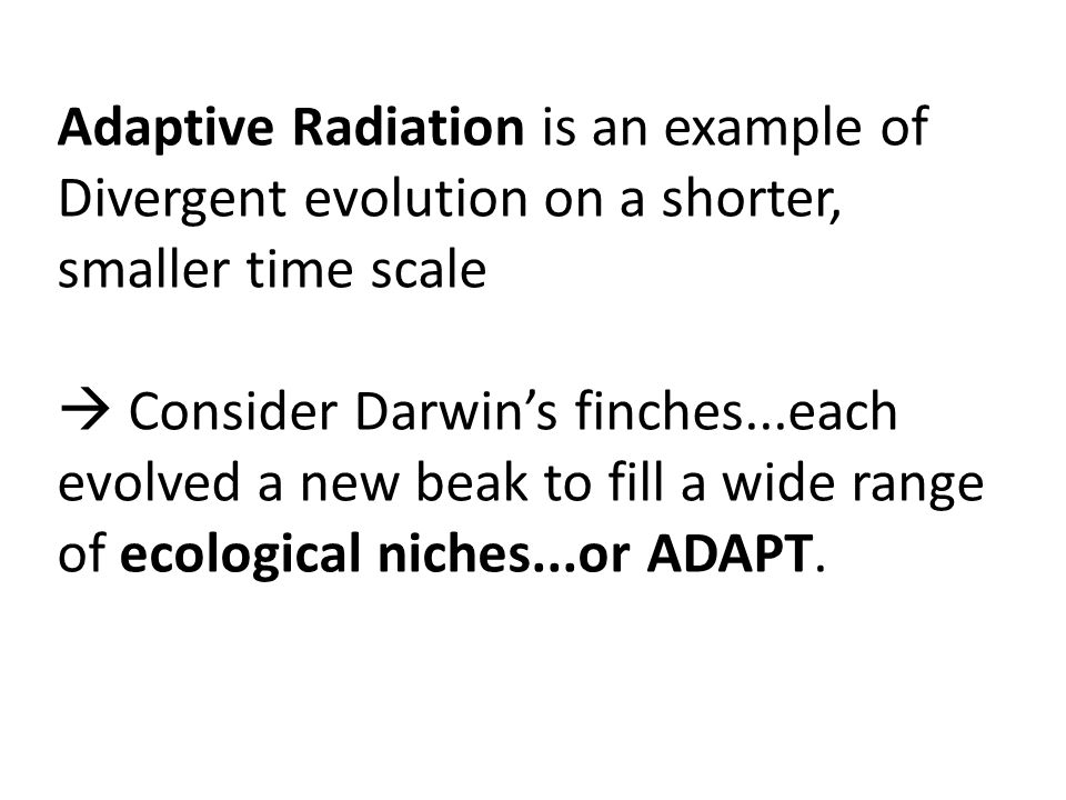 Adaptive Radiation is an example of Divergent evolution on a shorter, smaller time scale Consider Darwins finches...each evolved a new beak to fill a