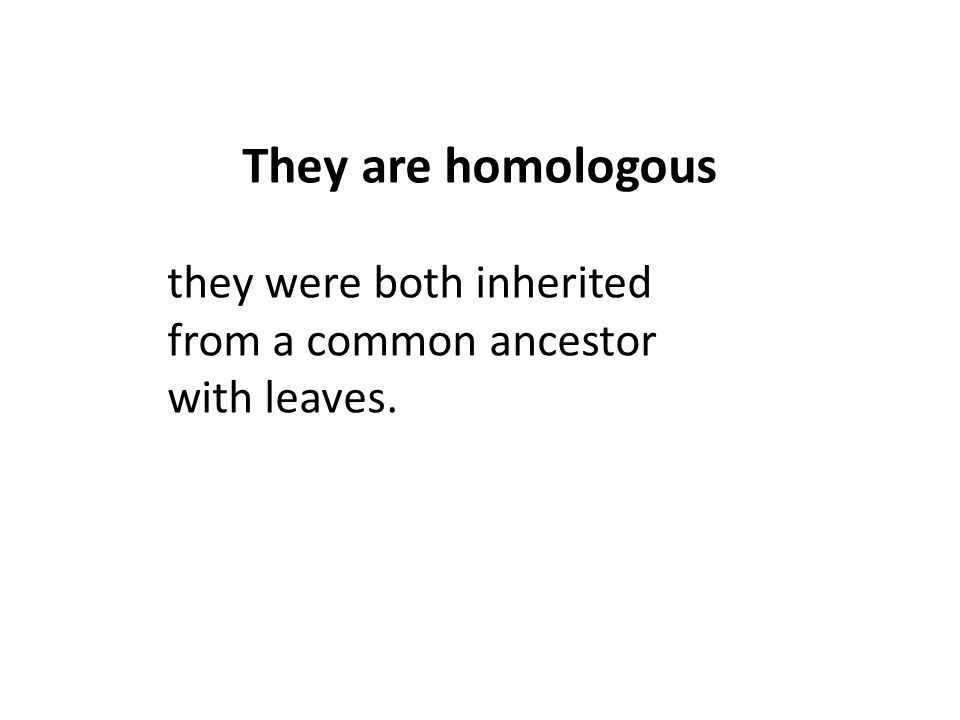 they were both inherited from a common ancestor with leaves. They are homologous