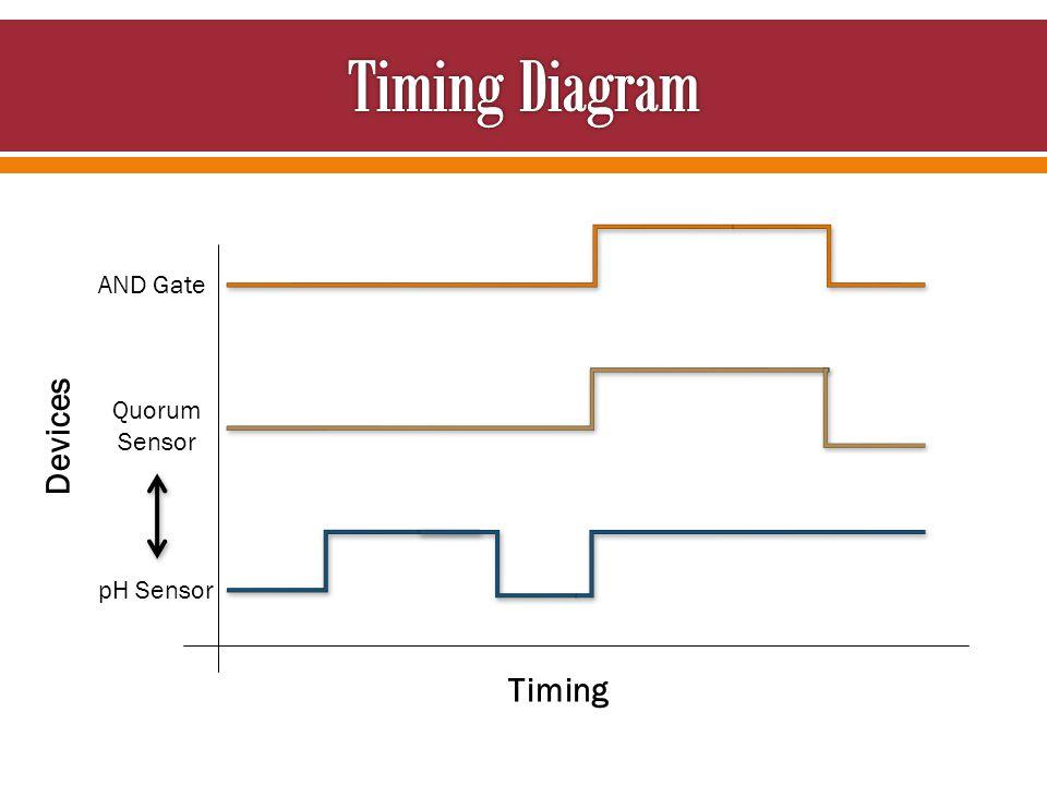 Timing Devices AND Gate Quorum Sensor pH Sensor