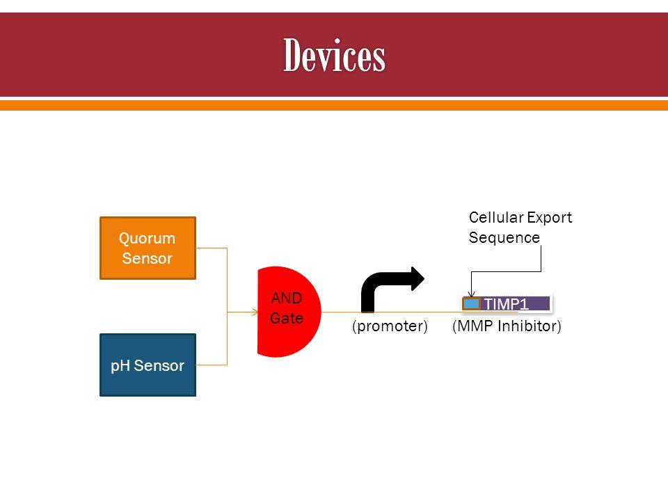 Quorum Sensor pH Sensor TIMP1 AND Gate Cellular Export Sequence (promoter) (MMP Inhibitor)