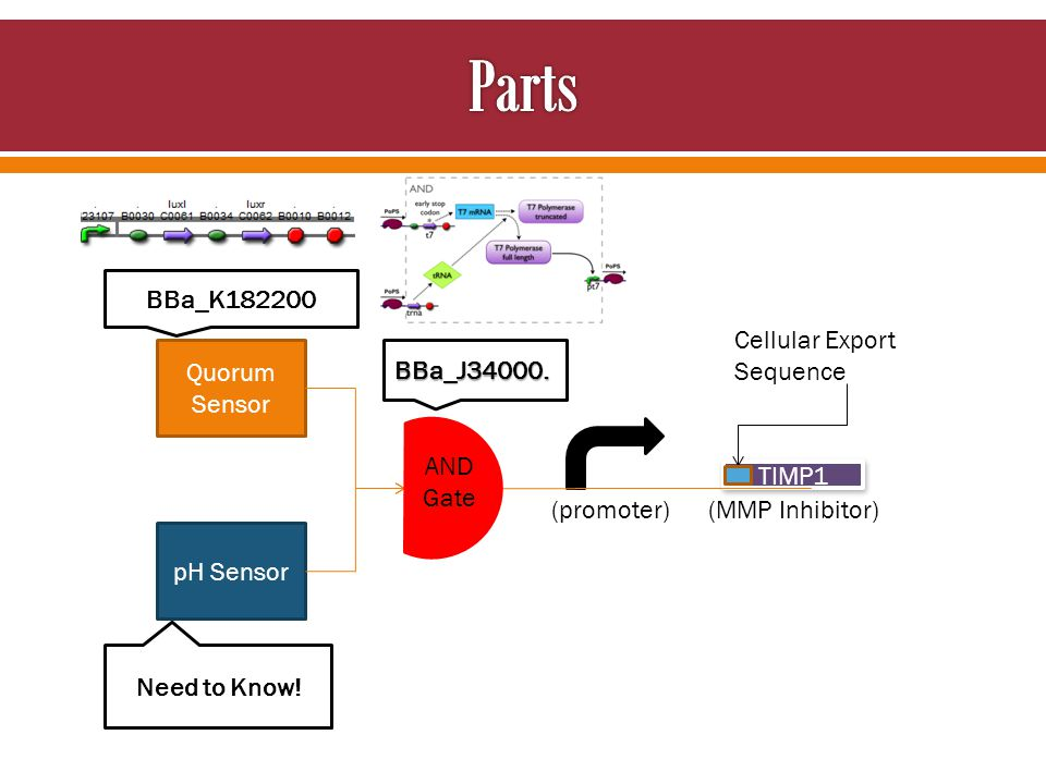 Quorum Sensor pH Sensor TIMP1 AND Gate Cellular Export Sequence BBa_J34000. BBa_K182200 Need to Know! (promoter) (MMP Inhibitor)