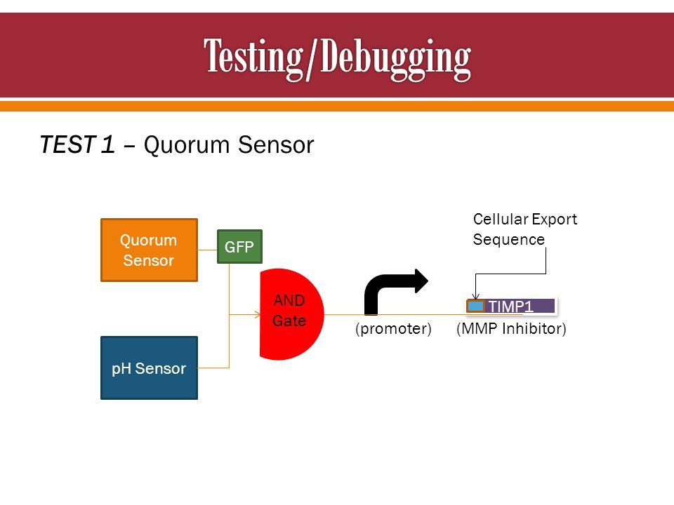TEST 1 – Quorum Sensor Cellular Export Sequence Quorum Sensor pH Sensor TIMP1 AND Gate GFP (promoter) (MMP Inhibitor)