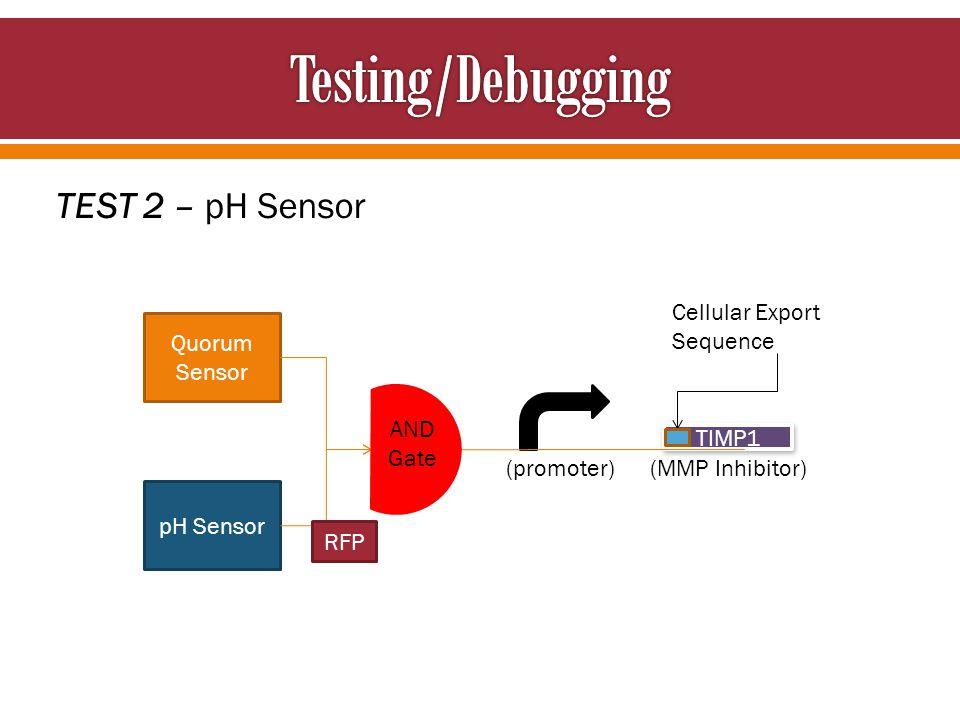 Cellular Export Sequence TEST 2 – pH Sensor Quorum Sensor pH Sensor TIMP1 AND Gate RFP (promoter) (MMP Inhibitor)