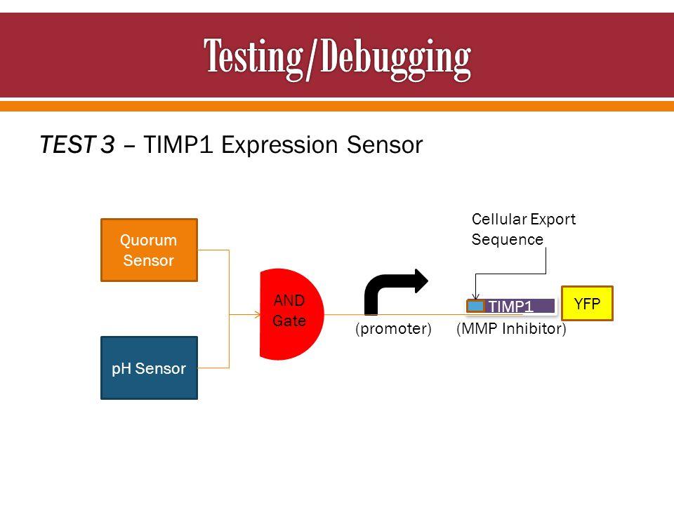 TEST 3 – TIMP1 Expression Sensor Cellular Export Sequence Quorum Sensor pH Sensor TIMP1 AND Gate YFP (promoter) (MMP Inhibitor)