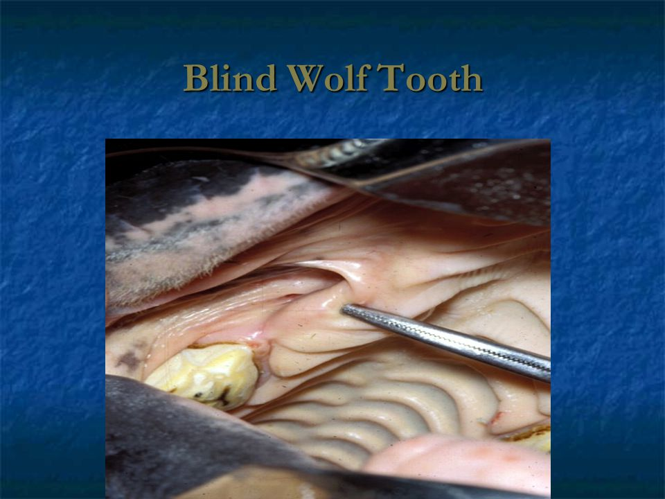 Blind Wolf Tooth