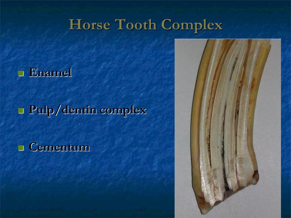 Horse Tooth Complex Enamel Enamel Pulp/dentin complex Pulp/dentin complex Cementum Cementum