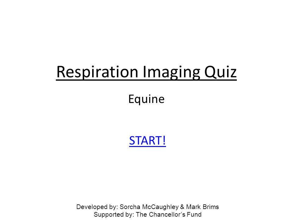 Respiration Imaging Quiz START! Equine Developed by: Sorcha McCaughley & Mark Brims Supported by: The Chancellors Fund