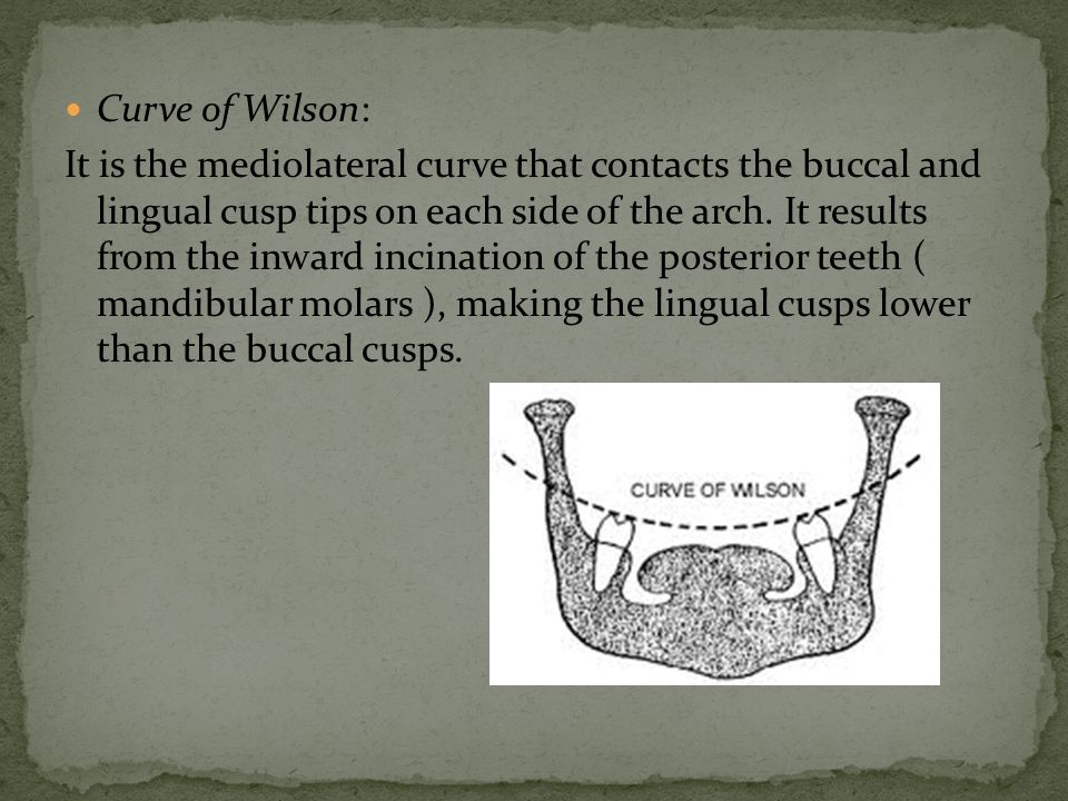 Curve of Wilson: It is the mediolateral curve that contacts the buccal and lingual cusp tips on each side of the arch.