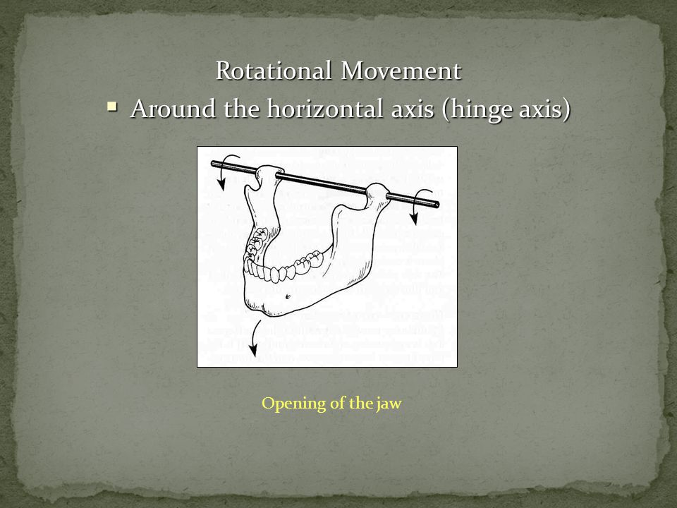 Rotational Movement Around the horizontal axis (hinge axis) Around the horizontal axis (hinge axis) Opening of the jaw
