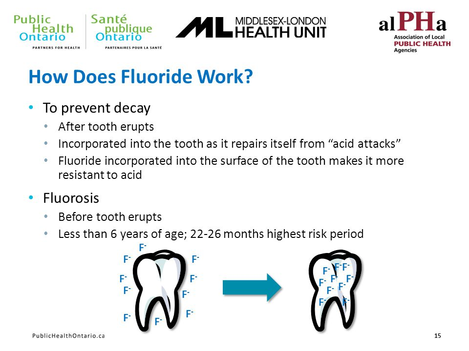 How Does Fluoride Work? To prevent decay After tooth erupts Incorporated into the tooth as it repairs itself from acid attacks Fluoride incorporated i