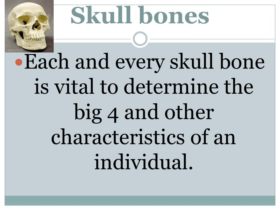 Skull bones Each and every skull bone is vital to determine the big 4 and other characteristics of an individual.