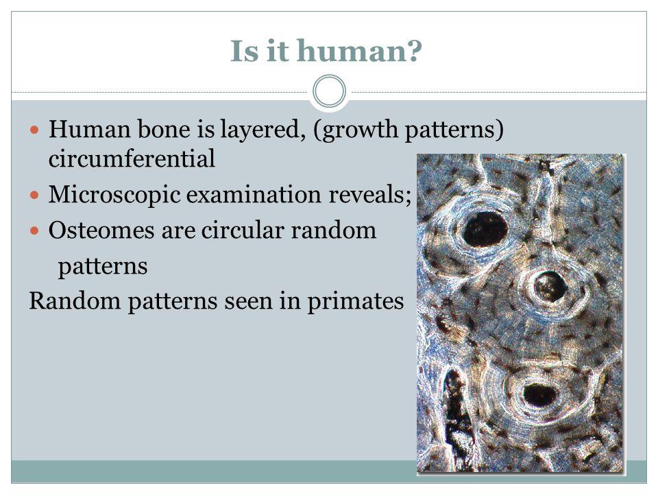 Is it human? Human bone is layered, (growth patterns) circumferential Microscopic examination reveals; Osteomes are circular random patterns Random pa