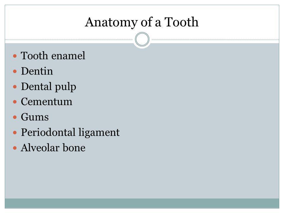 Anatomy of a Tooth Tooth enamel Dentin Dental pulp Cementum Gums Periodontal ligament Alveolar bone