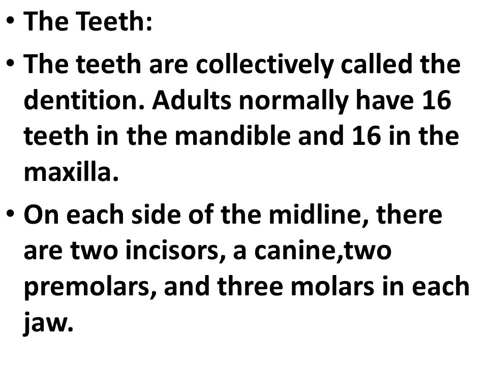 The Teeth: The teeth are collectively called the dentition. Adults normally have 16 teeth in the mandible and 16 in the maxilla. On each side of the m