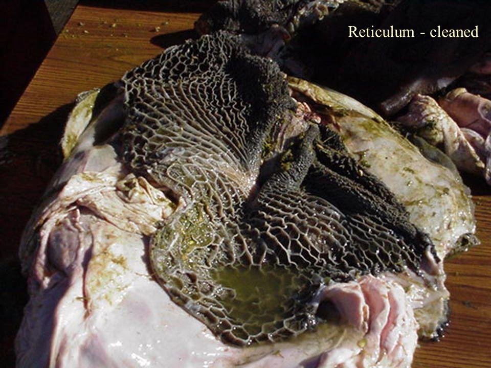 Reticulum - cleaned