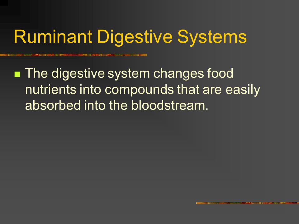 Ruminant Digestive Systems The digestive system changes food nutrients into compounds that are easily absorbed into the bloodstream.