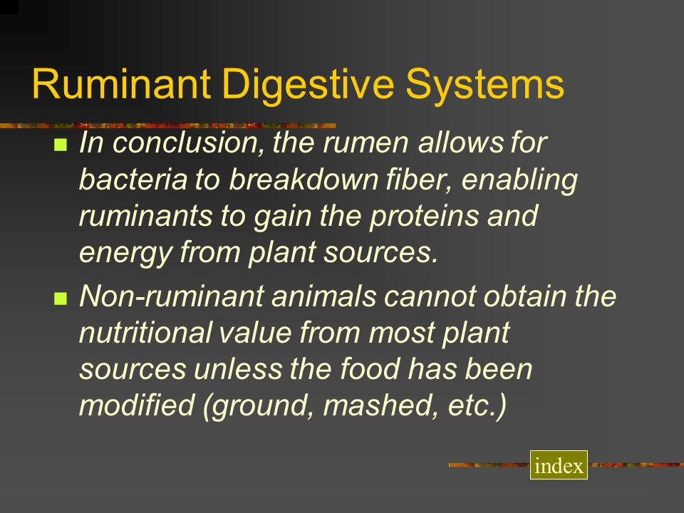 Ruminant Digestive Systems In conclusion, the rumen allows for bacteria to breakdown fiber, enabling ruminants to gain the proteins and energy from pl