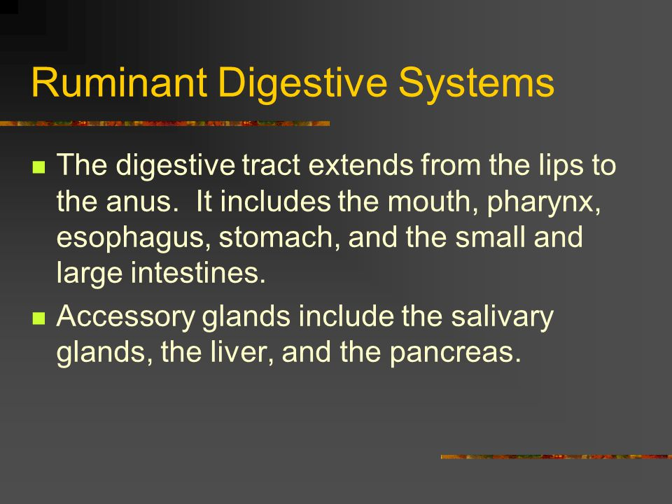 Ruminant Digestive Systems Omasum - section that is round and muscular.