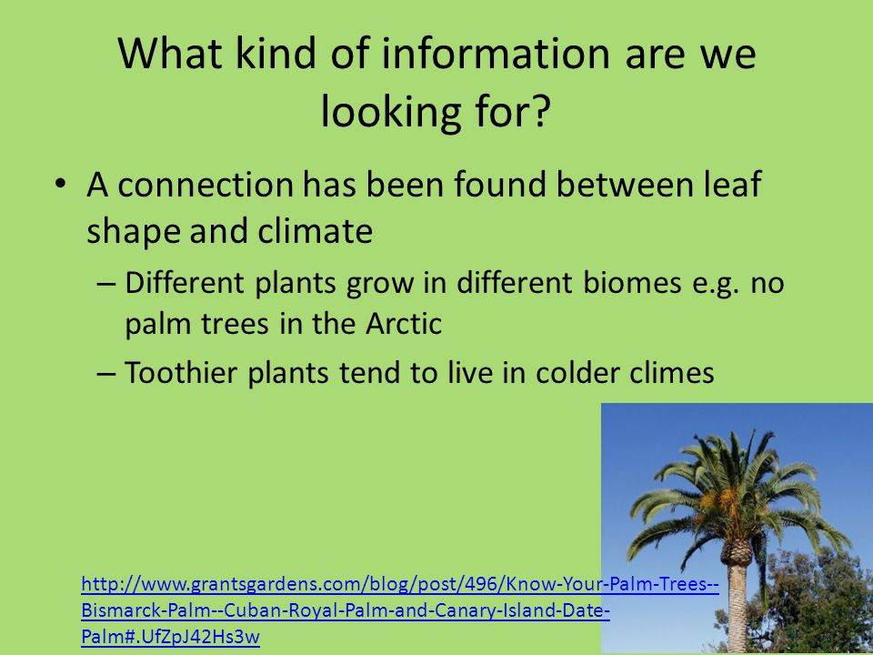 What kind of information are we looking for? A connection has been found between leaf shape and climate – Different plants grow in different biomes e.