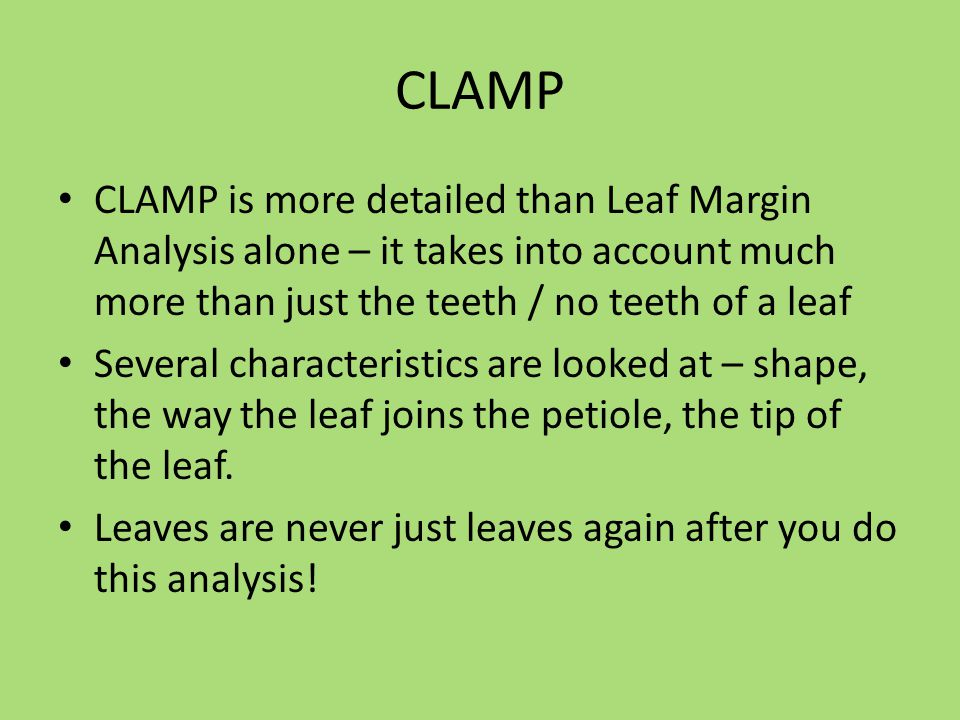 CLAMP CLAMP is more detailed than Leaf Margin Analysis alone – it takes into account much more than just the teeth / no teeth of a leaf Several charac