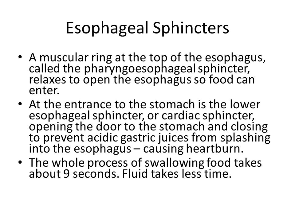 Esophageal Sphincters A muscular ring at the top of the esophagus, called the pharyngoesophageal sphincter, relaxes to open the esophagus so food can
