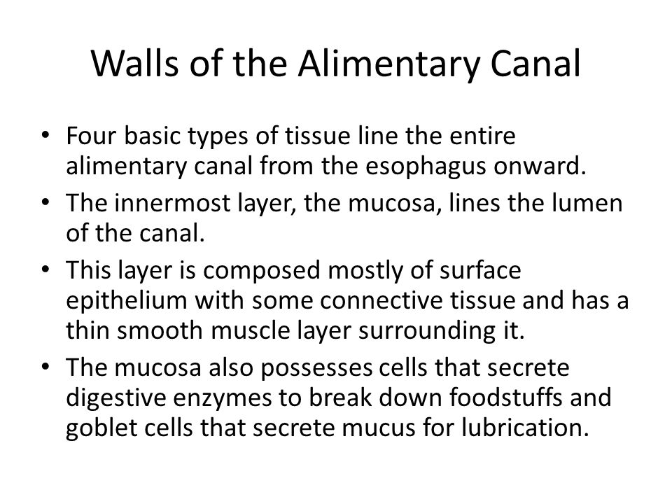 Walls of the Alimentary Canal Four basic types of tissue line the entire alimentary canal from the esophagus onward. The innermost layer, the mucosa,