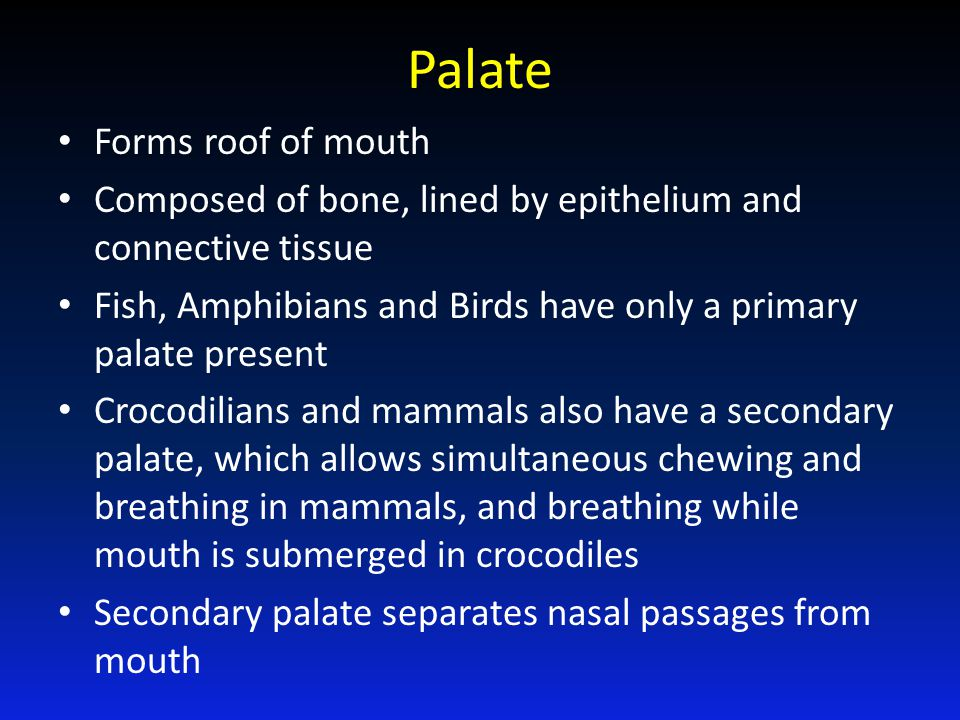 Palate Forms roof of mouth Composed of bone, lined by epithelium and connective tissue Fish, Amphibians and Birds have only a primary palate present C