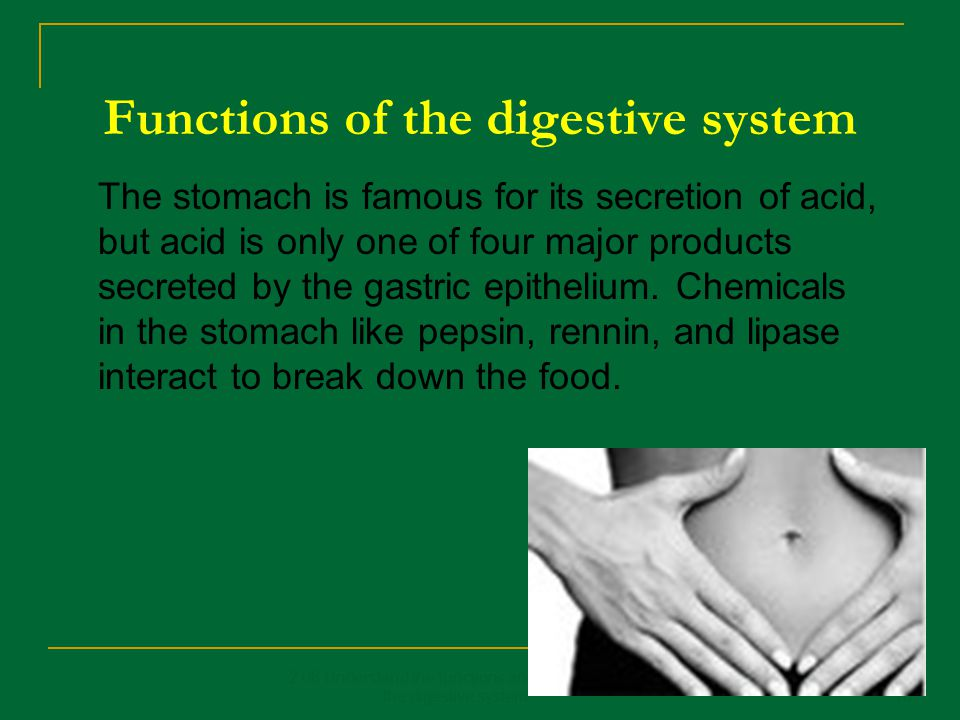 Functions of the digestive system 2.08 Understand the functions and disorders of the digestive system16 The stomach is famous for its secretion of aci