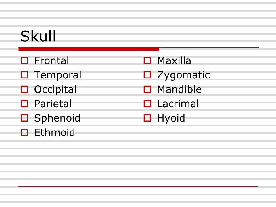 Skull Frontal Temporal Occipital Parietal Sphenoid Ethmoid Maxilla Zygomatic Mandible Lacrimal Hyoid