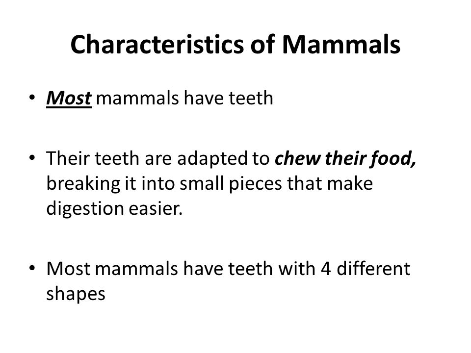 Mammal teeth Teeth with 4 different shapes: – Incisors –to bite off and cut food – Canines– pointed teeth that stab food and tear into it – Pre-molars & molars have broad, flat upper surfaces for grinding and shredding food
