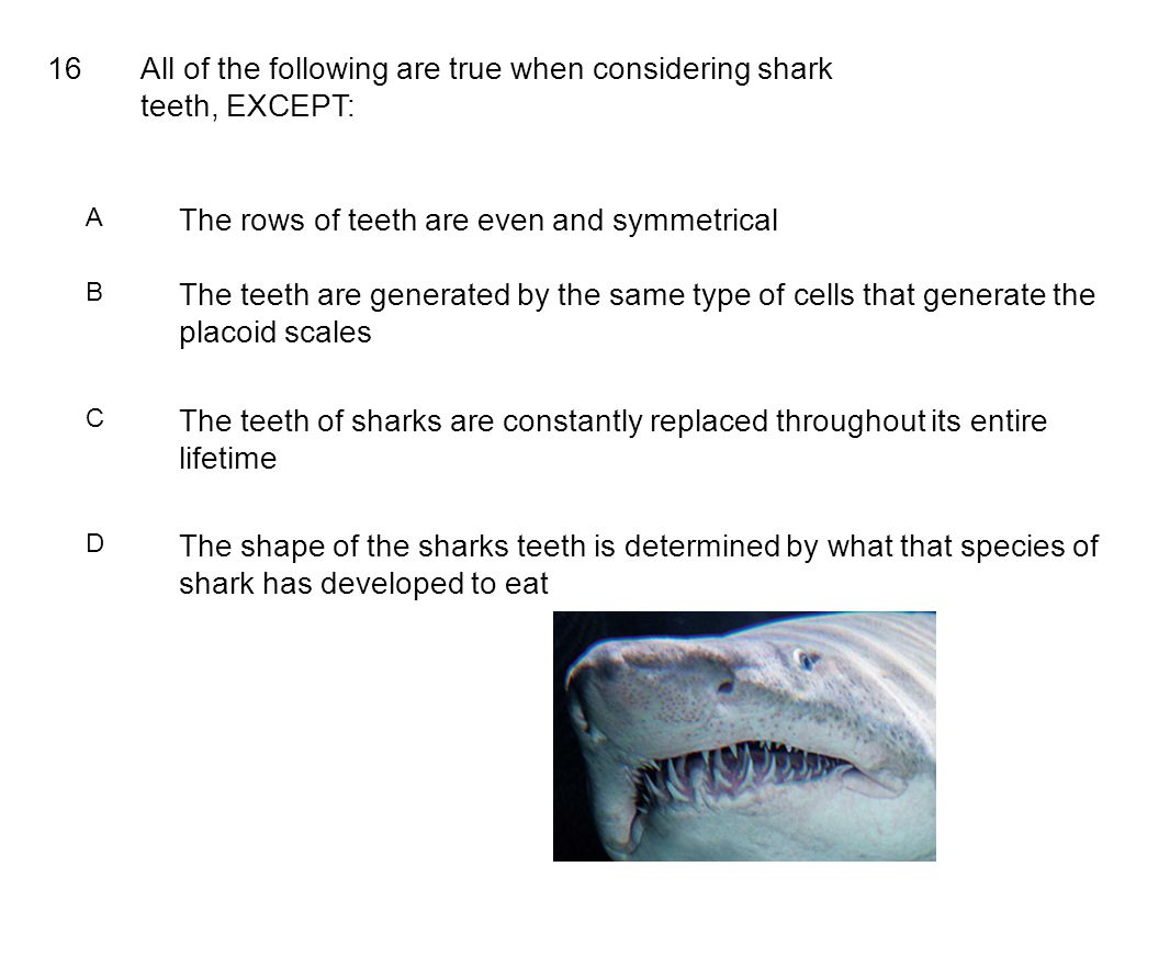 16All of the following are true when considering shark teeth, EXCEPT: A The rows of teeth are even and symmetrical B The teeth are generated by the sa