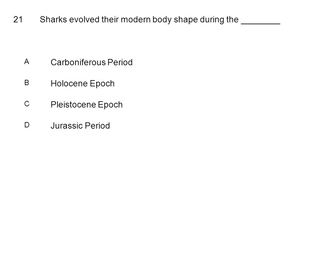 21Sharks evolved their modern body shape during the ________ A Carboniferous Period B Holocene Epoch C Pleistocene Epoch D Jurassic Period