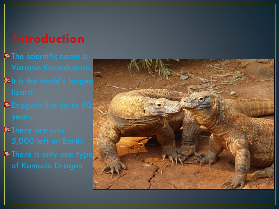 The scientific name is Varanus Komodoensis. It is the worlds largest lizard Dragons live up to 50 years There are only 5,000 left on Earth! There is o