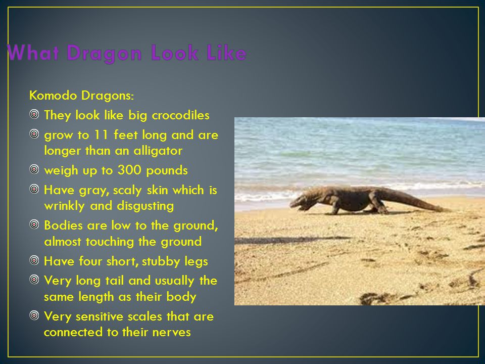 Dragons can stand on their tails!.If another dragon poisons it, the dose does not kill them.