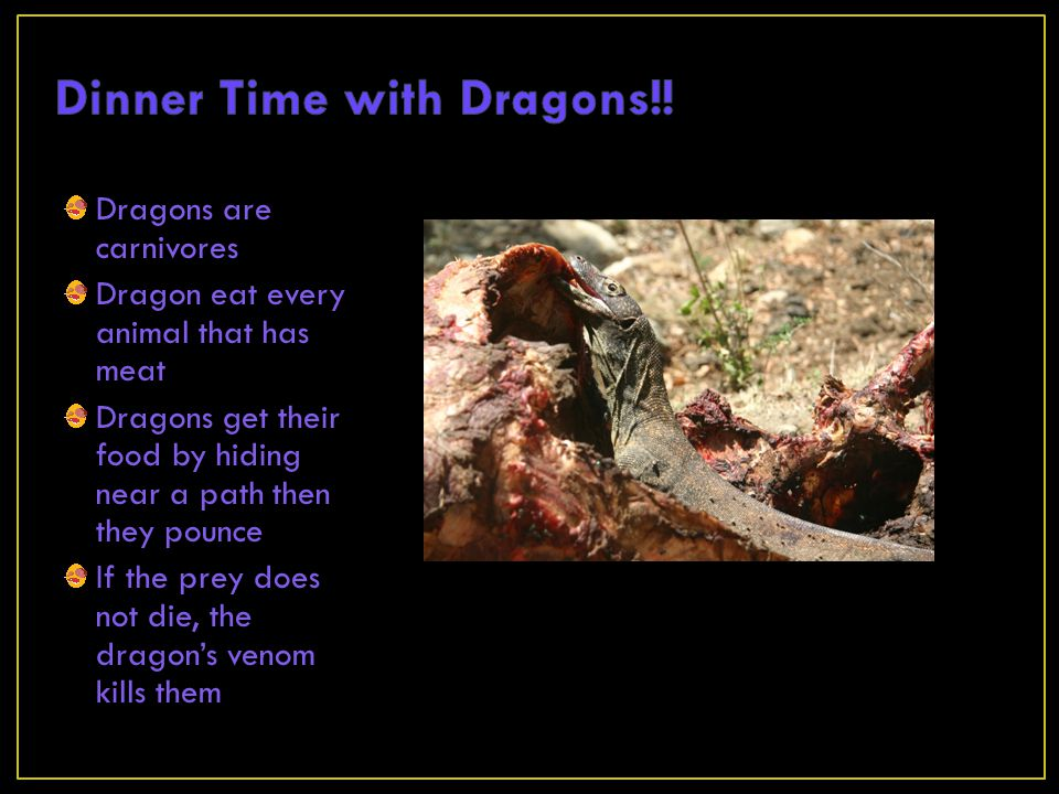 Dragons are carnivores Dragon eat every animal that has meat Dragons get their food by hiding near a path then they pounce If the prey does not die, t