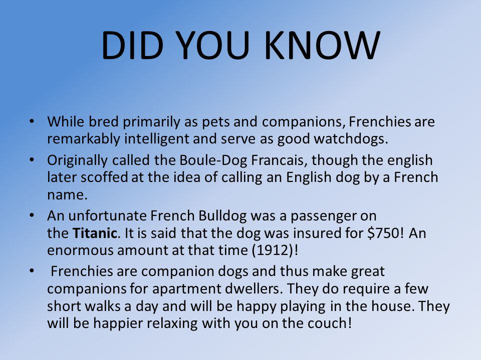 DID YOU KNOW While bred primarily as pets and companions, Frenchies are remarkably intelligent and serve as good watchdogs.