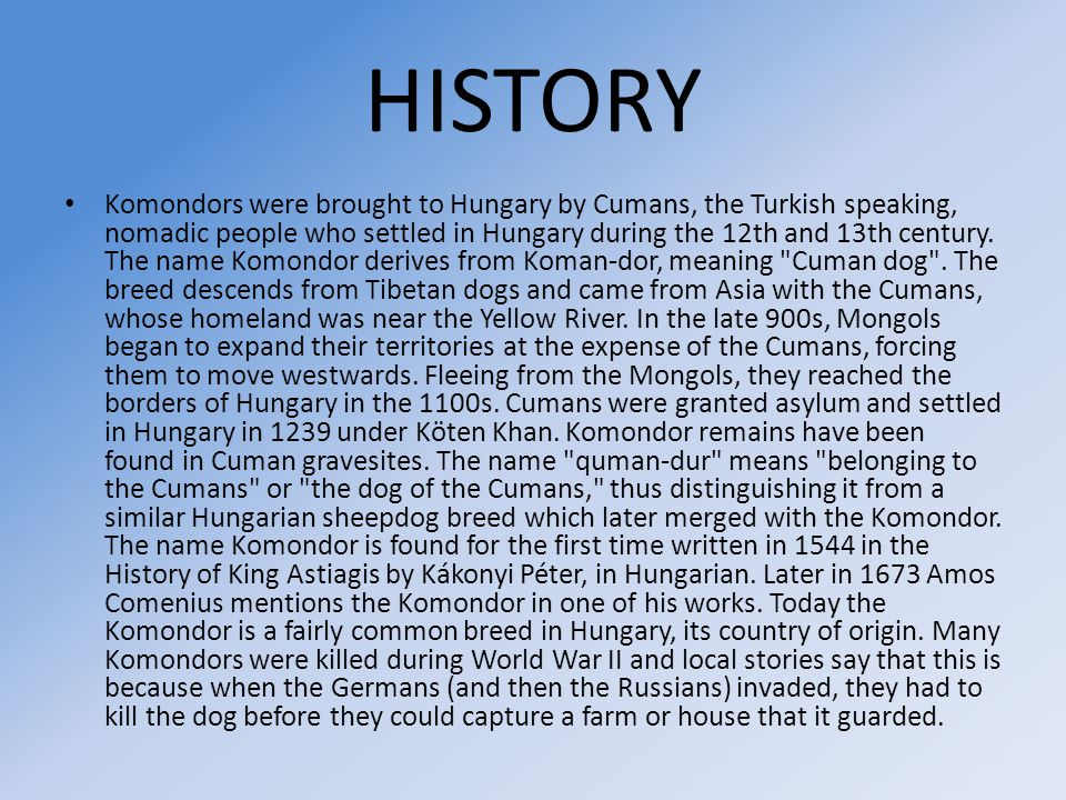 HISTORY Komondors were brought to Hungary by Cumans, the Turkish speaking, nomadic people who settled in Hungary during the 12th and 13th century.