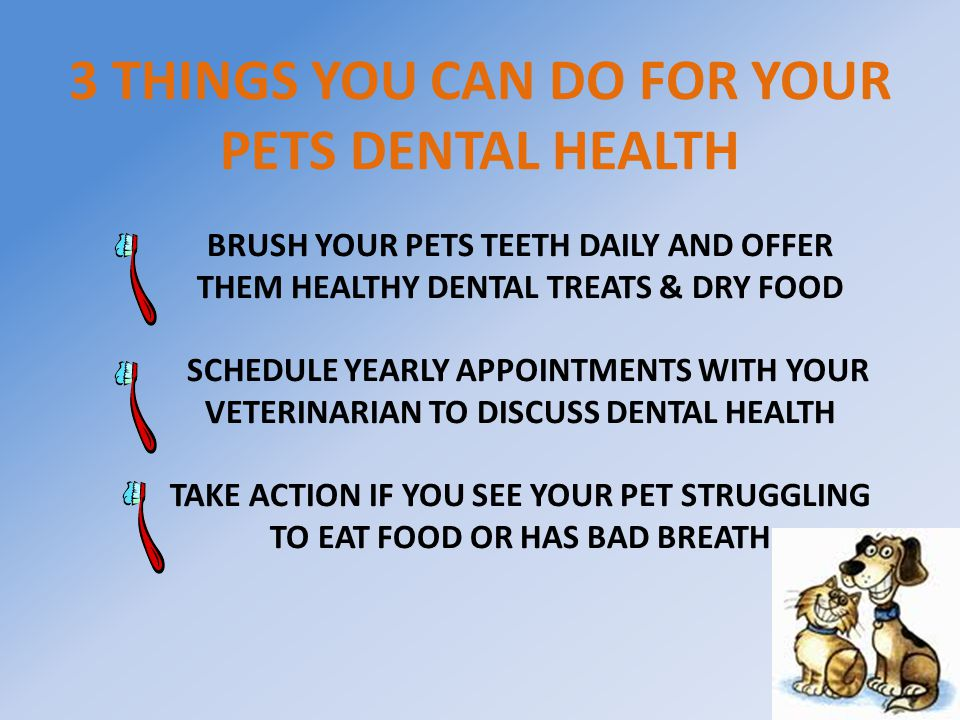 3 THINGS YOU CAN DO FOR YOUR PETS DENTAL HEALTH BRUSH YOUR PETS TEETH DAILY AND OFFER THEM HEALTHY DENTAL TREATS & DRY FOOD SCHEDULE YEARLY APPOINTMENTS WITH YOUR VETERINARIAN TO DISCUSS DENTAL HEALTH TAKE ACTION IF YOU SEE YOUR PET STRUGGLING TO EAT FOOD OR HAS BAD BREATH
