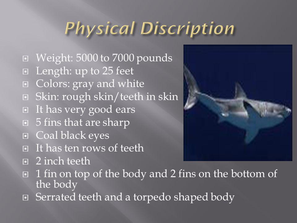 Weight: 5000 to 7000 pounds Length: up to 25 feet Colors: gray and white Skin: rough skin/teeth in skin It has very good ears 5 fins that are sharp Coal black eyes It has ten rows of teeth 2 inch teeth 1 fin on top of the body and 2 fins on the bottom of the body Serrated teeth and a torpedo shaped body