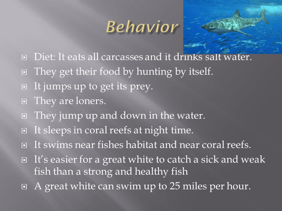 Diet: It eats all carcasses and it drinks salt water.