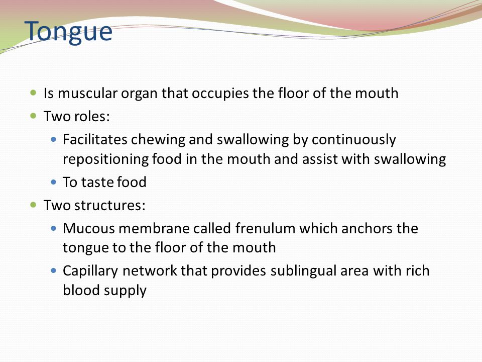 Tongue Is muscular organ that occupies the floor of the mouth Two roles: Facilitates chewing and swallowing by continuously repositioning food in the mouth and assist with swallowing To taste food Two structures: Mucous membrane called frenulum which anchors the tongue to the floor of the mouth Capillary network that provides sublingual area with rich blood supply