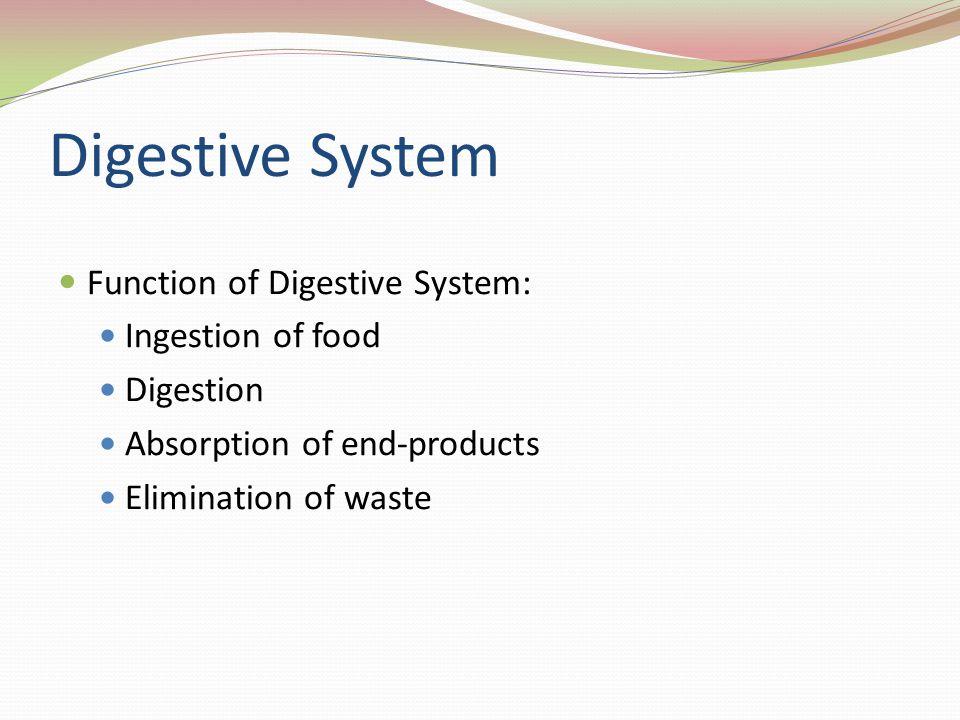 Digestive System Function of Digestive System: Ingestion of food Digestion Absorption of end-products Elimination of waste